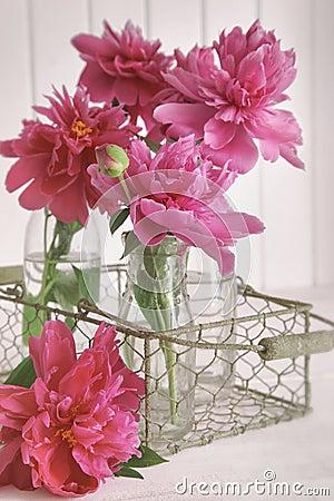 Plan rapproché des fleurs de pivoine dans des bouteilles