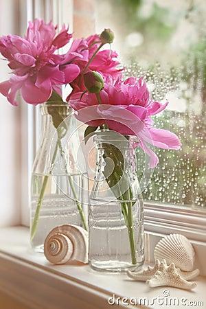 Plan rapproché des fleurs de pivoine dans des bouteilles à lait