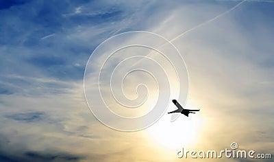 Plane i sunset