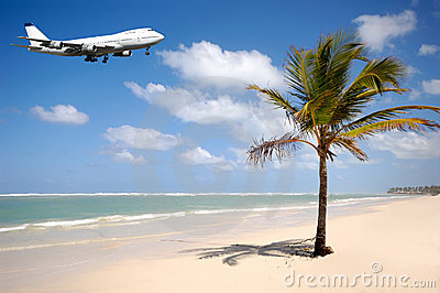 Plane and palm on beach