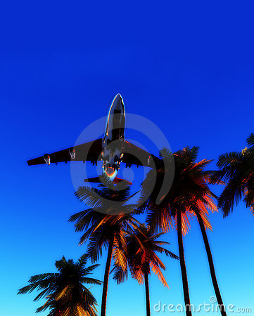 Plane And Wild Palms 6