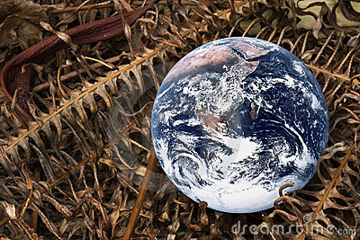 Planet Earth with Dried Ferns