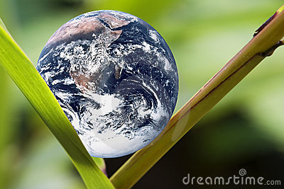 Planet Earth on Green Leaf