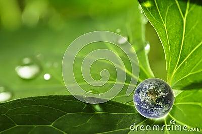 Planet on leaf