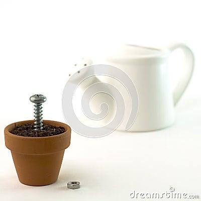 Free Plant Royalty Free Stock Photo - 1670935