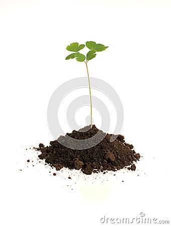 Free Plant Royalty Free Stock Image - 3158496