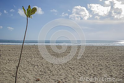 Plant with a beach on the background