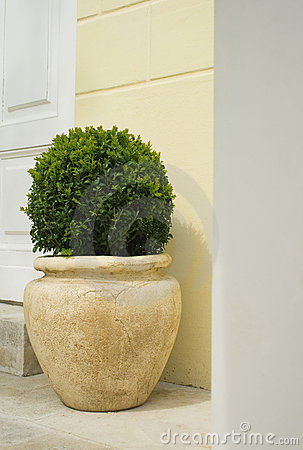 Plant in big ceramic pot