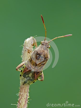 Plant bug