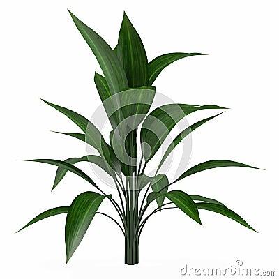 Plant bush isolated