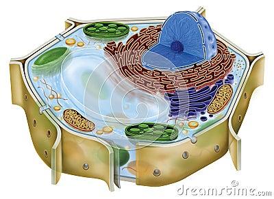 Plant cell Cartoon Illustration