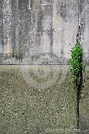 Plant In Concrete Wall