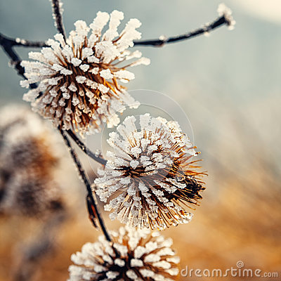 Free Plant Covered With Hoarfrost Royalty Free Stock Photography - 88819837
