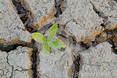 Plant in cracked earth.