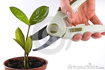 Plant cut
