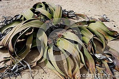 Plant in desert sand