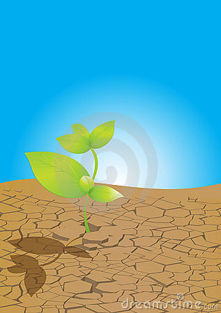 Plant From Dry Ground Stock Photography Image 11882452