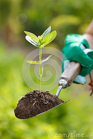 Plant in earth on a small spade