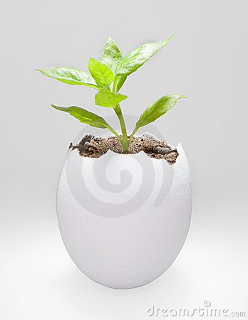 Plant in a egg shell