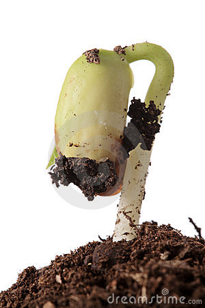 Plant emerging from the ground