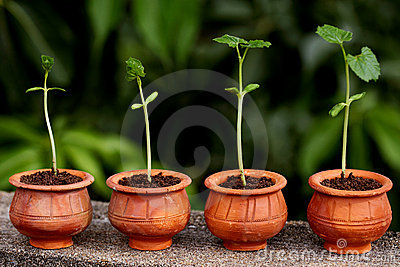 Plant Evolution -New Life Stock Photography - Image: 21274732