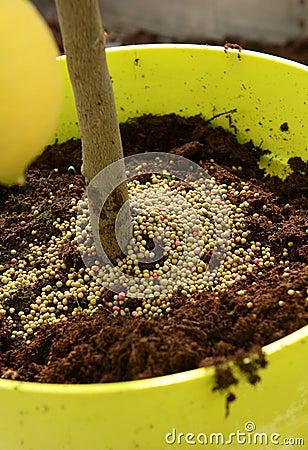 Plant fertilizer stock photo image 51406271 - Organic flower fertilizer homemade solutions ...
