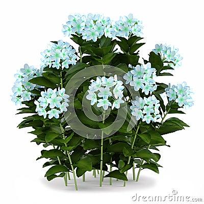 Plant flower bush