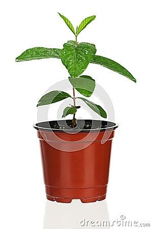Plant in flowerpot