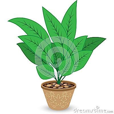 Plant in Flowerpot  on White