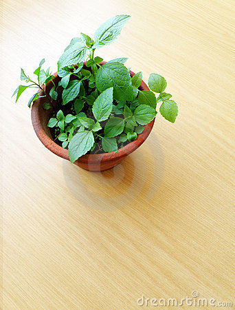 Plant in flowerpot on wooden table