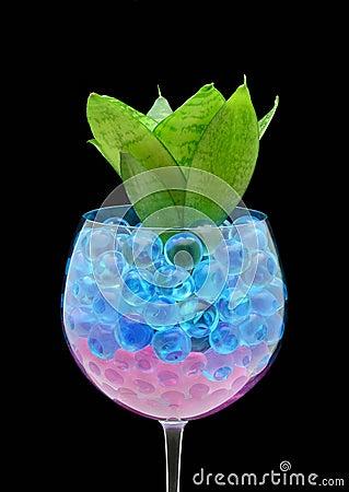 Plant in gel bolls