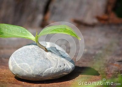 Plant germinates in stone