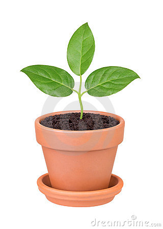 Plant with green leaves growing in a pot royalty free What are miniature plants grown in pots called