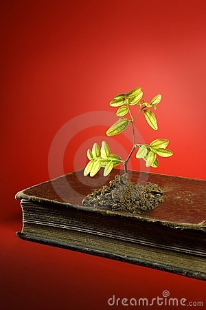 Plant growing from aged old book