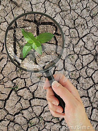 Plant growing on dry earth