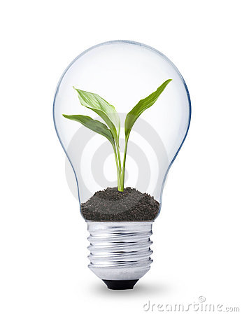 Plant growing inside a lightbulb