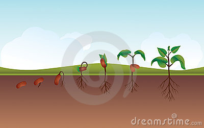 Plant growing process illustration