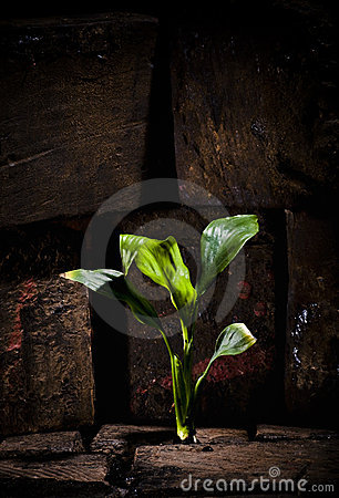 Free Plant Growing Trough Dead Ground Royalty Free Stock Image - 14314536