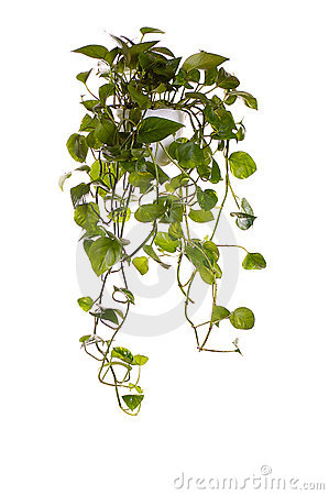Free Plant Grown In Hanging Pot Royalty Free Stock Photo - 3889155