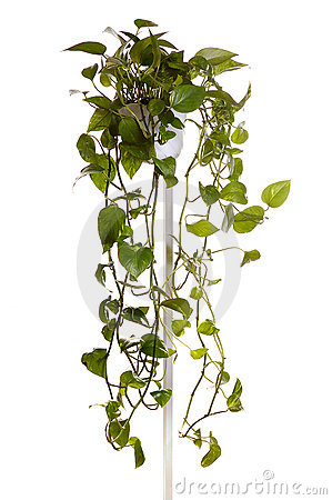 Free Plant Grown In Hanging Pot Stock Photos - 3889163
