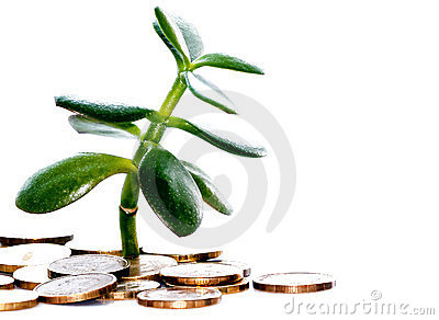 Plant grows from a coin