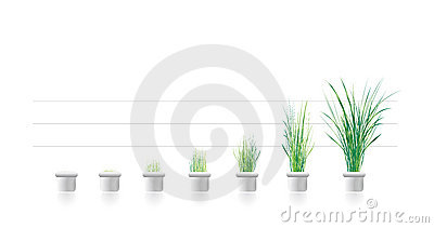 Plant growth in stages