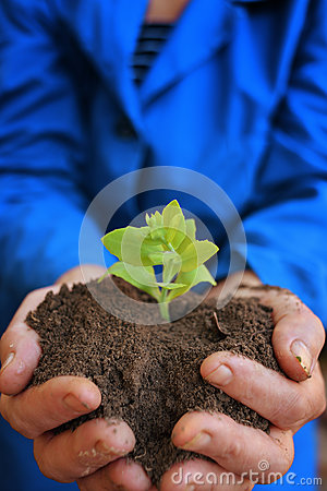 Plant in hands of agricultural worker