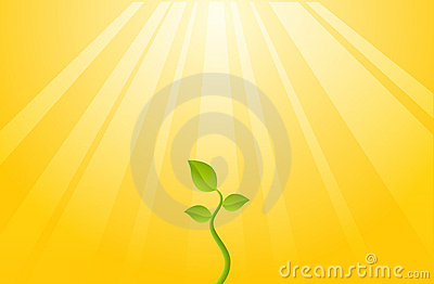 Plant of Hope