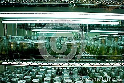 Plant Incubator Room