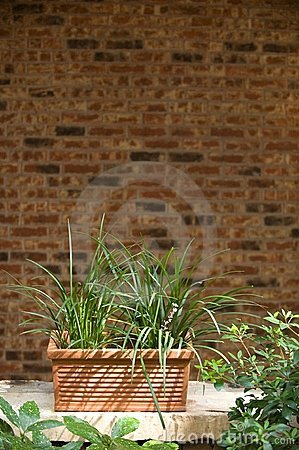 plant infront of brick wall