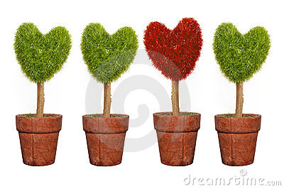 Plant Isolated On White Background Royalty Free Stock Images - Image: 16434799
