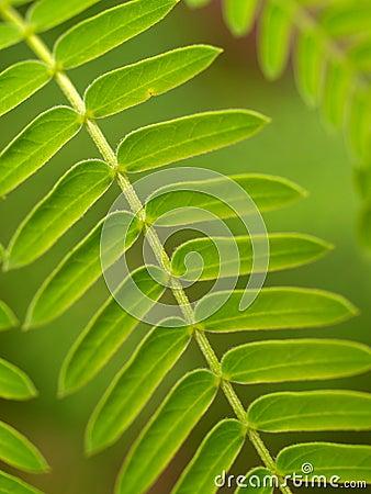 Plant leaf 03