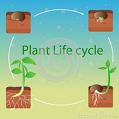 Plant life cycle vector stock vector image 70815968 for Soil life cycle
