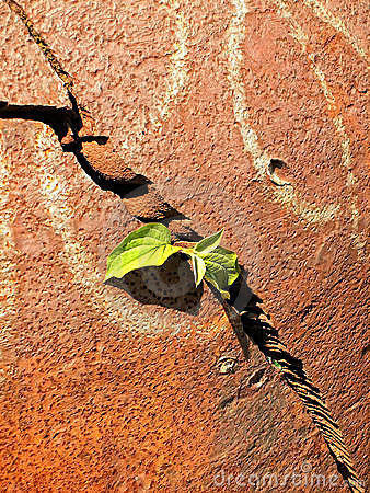 Plant and metal